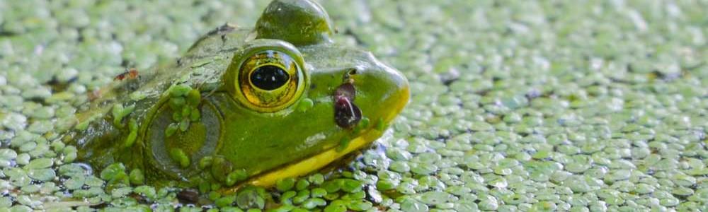 froggy-1000x300